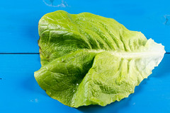 Green Lettuce on the blue background