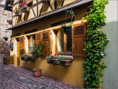 Eguisheim - Alsace - (Haut-Rhin)