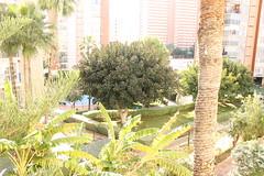 Fabulosas vistas y muy soleado. En su inmobiliaria Asegil en Benidorm le ayudaremos sin compromiso. www.inmobiliariabenidorm.com