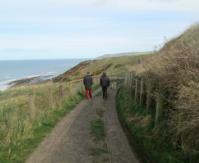 Cove Path, near Cockburnspath