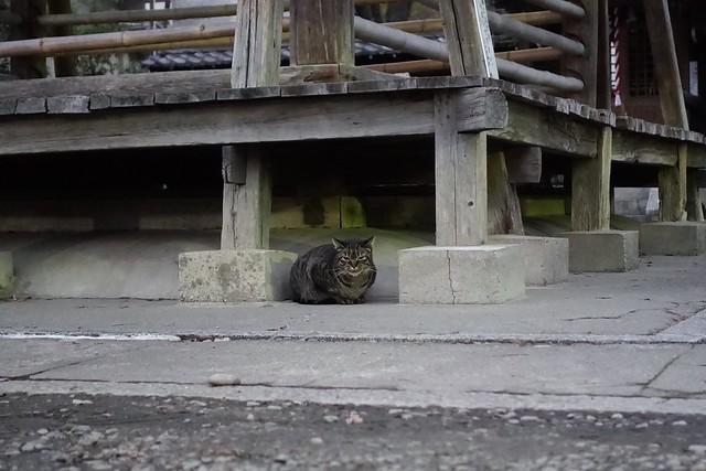 Today's Cat@2019-02-06