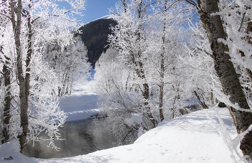 Winter fairytale in the Goms (The Rhône river)