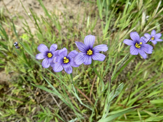 wildflowers in bluffs park