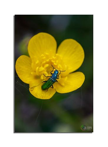 """« """"Les hommes sont des insectes se dévorant les uns les autres sur un petit atome de boue."""". »  De Voltaire"""
