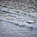 Frozen river...