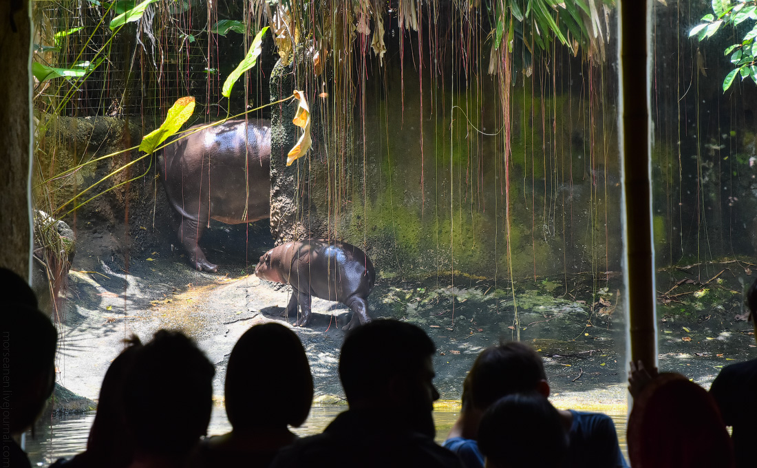 Singapore-zoo-(51)