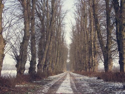 Allee Perdoel - 23. Januar 2019 - Schleswig-Holstein - Deutschland