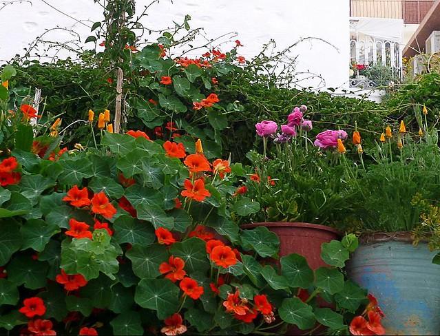 Ermoupolis-flores