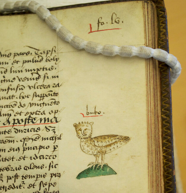 Glasgow Univ. Library, Sp Coll MS Hunter 251 (U.4.9), England, c.1475-1500, f. 55r