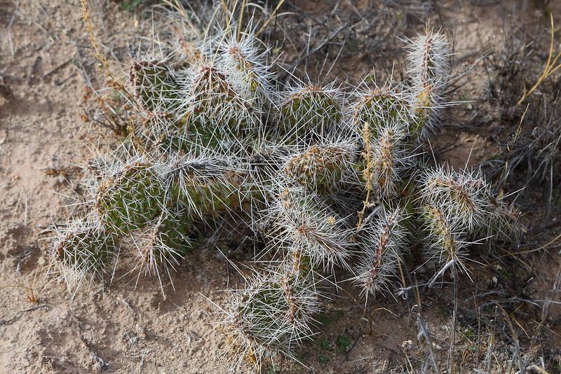 IMG_6180 Cactus, Petrified Forest National Park