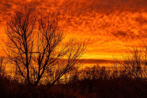 wetlandspark clarkcountywetlandspark wetlands lasvegas nevada desert mojavedesert sunrise photography jamesmarvinphelps jamesmarvinphelpsphotography