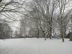 1. Februar 2019 - 9:23 - Winterspaziergang durch Roxel am 1. Februar 2019