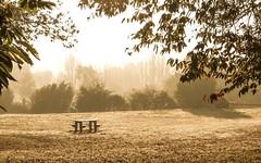 Golden Mist 3/3 (Let's Have A Sit) - Photo of Essé