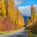Speargrass Flats Road (near Arrowtown, New Zealand)