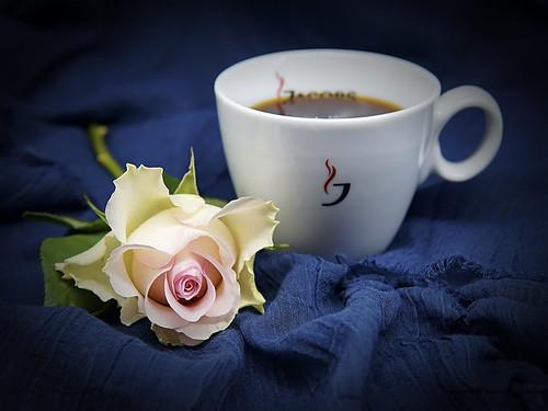 Kaffee und Rose