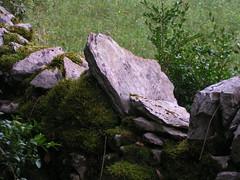 20080914 36778 1015 Jakobus Buchsbaum Steinmauer Platten Moos - Photo of Espagnac-Sainte-Eulalie