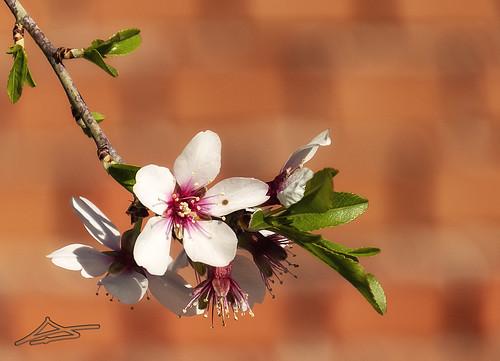 Llega la Primavera 4