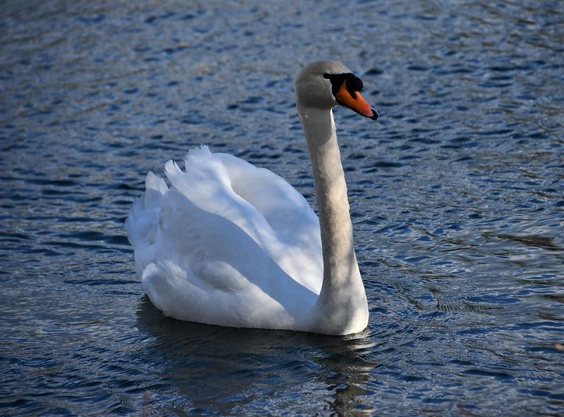 Swan 19.03 (5)