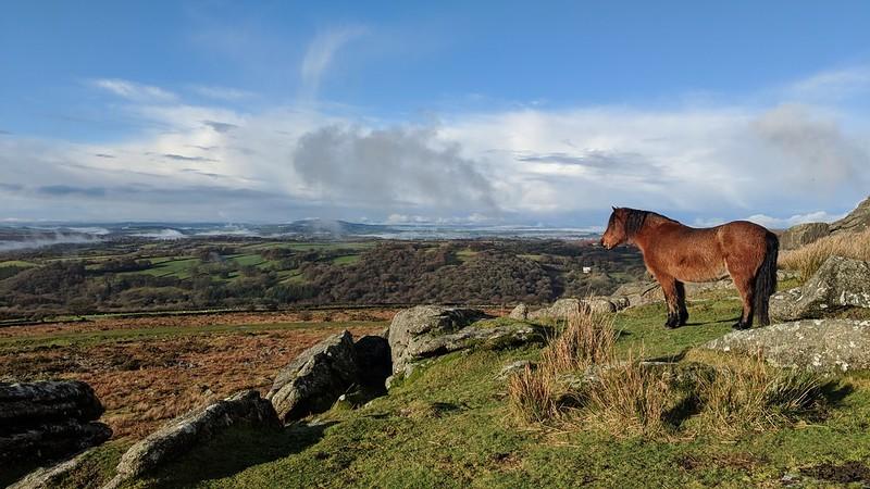 Ingra Tor Pony