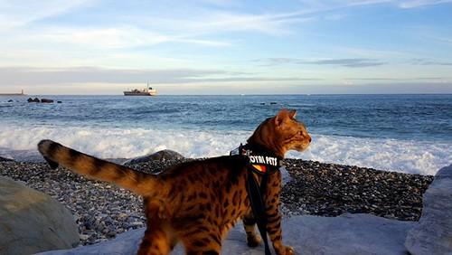 [喵遊趣]貓主子與海的初遇~在太平洋公園