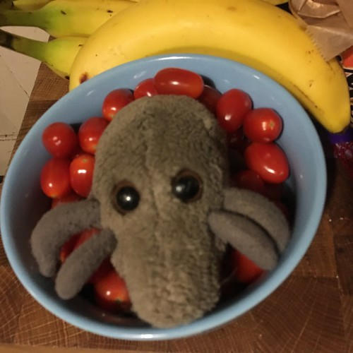 Still life with bananas, tomatoes, and Dust Mite