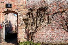 Rose Garden wall