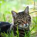 Gatto di Partina by lorenzomazzetti53