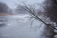 Serene scene at Chagrin River Park