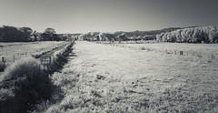 fenced fields near Peña Blanca