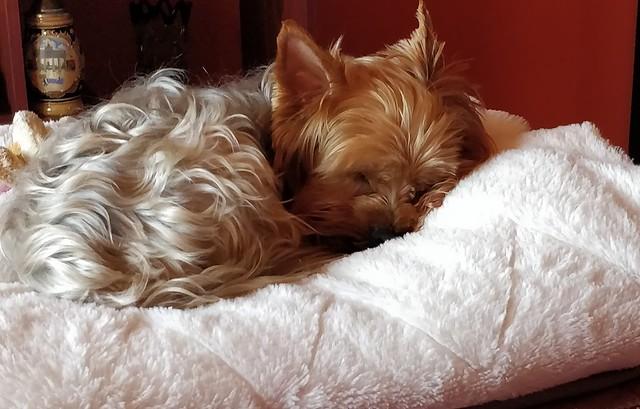 Hupi kutya alszik