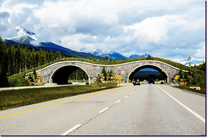 An animal bridge at Banff National Park in Alberta, Canada