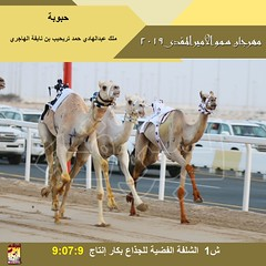 صور سباق الجذاع (الأشواط العامة) مهرجان سمو الأمير المفدى صباح 3-4-2019