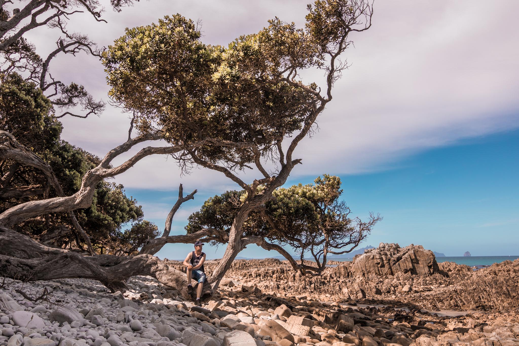 Mangawhai Cliff walk-4