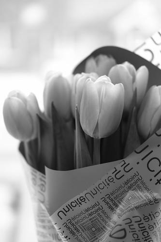 flowers 22-02-2019 (5)