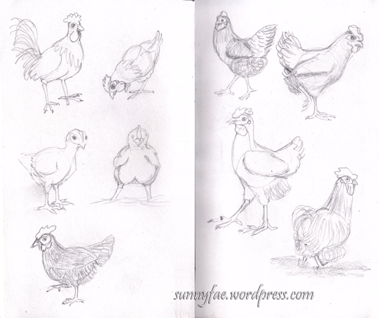 chicken pencil sketches