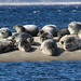 seals at sandy hook