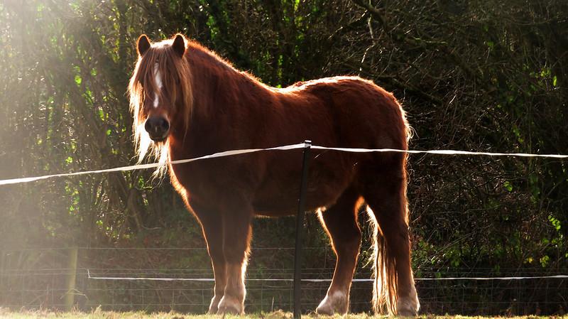 Pony at Aller