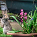 the new garden guest