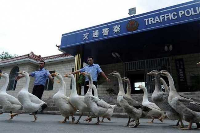 4909 6 unusual things that you will only witness in China (1)