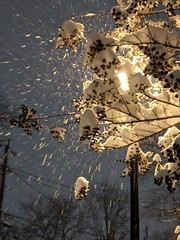 Snowflakes and streetlight, part 2