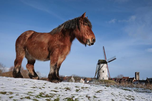 Damme Horse, Fujifilm X-Pro2, XF16mmF1.4 R WR