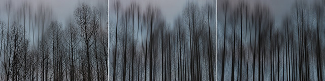 Requiem for a Wood triptych