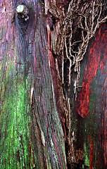 "Cincinnati - Spring Grove Cemetery & Arboretum ""Bald Cypress Tree Trunk - Nature's Abstract Art"""