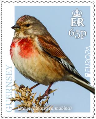 Guernsey - National Birds: EUROPA 2019 (April 1, 2019)