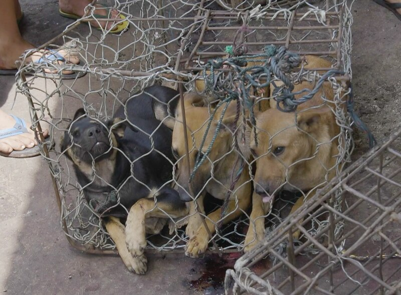 Dogs in cages at Indonesia's markets