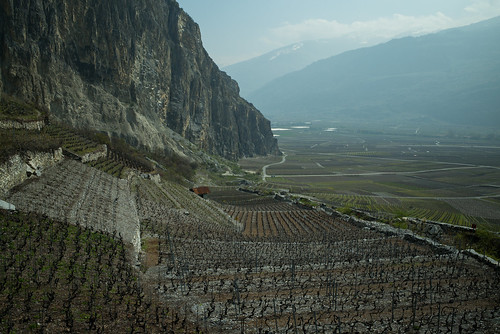 Chemin du vignoble (Chamoson, Valais)