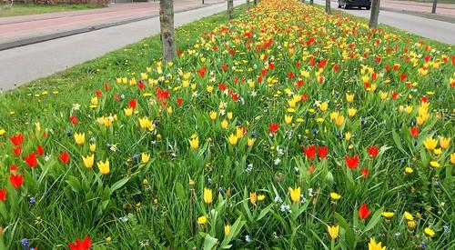 Een fleurige lentedag - Foto: Tiny Post.