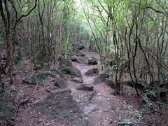 Morne Champagne Trail
