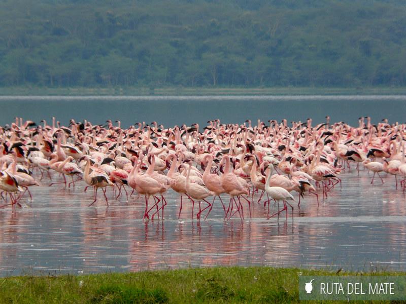 Guia para viajar a Kenia y Tanzania P1100173