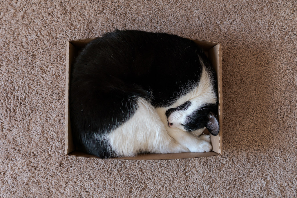 Our cat Boo sleeps curled up in a square in a shallow cardboard box